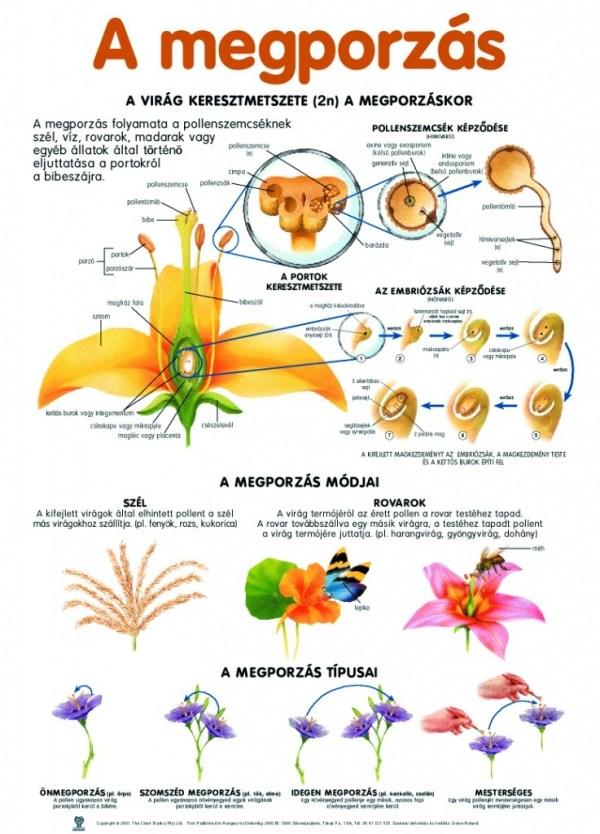 Set planse botanica 5