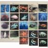 Fauna marina - joc loto 2