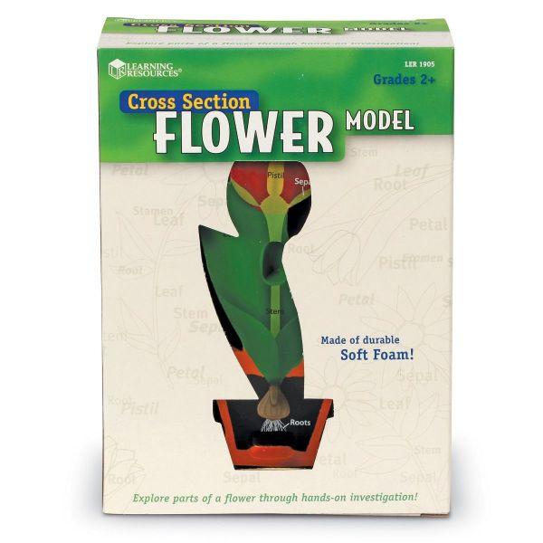 Model de sectiune a florii 5