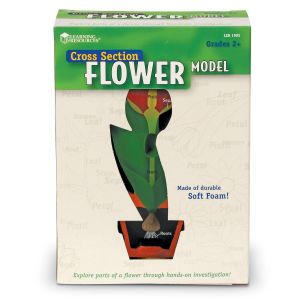 Model de sectiune a florii 7