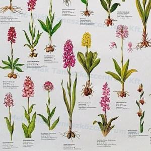 Orhidee 5