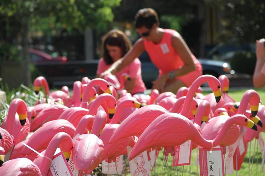 """title=""""Flamingo mania - Fenicotteri rosa - Iniziativa benefica - Tumore al seno - Orlando Florida"""""""