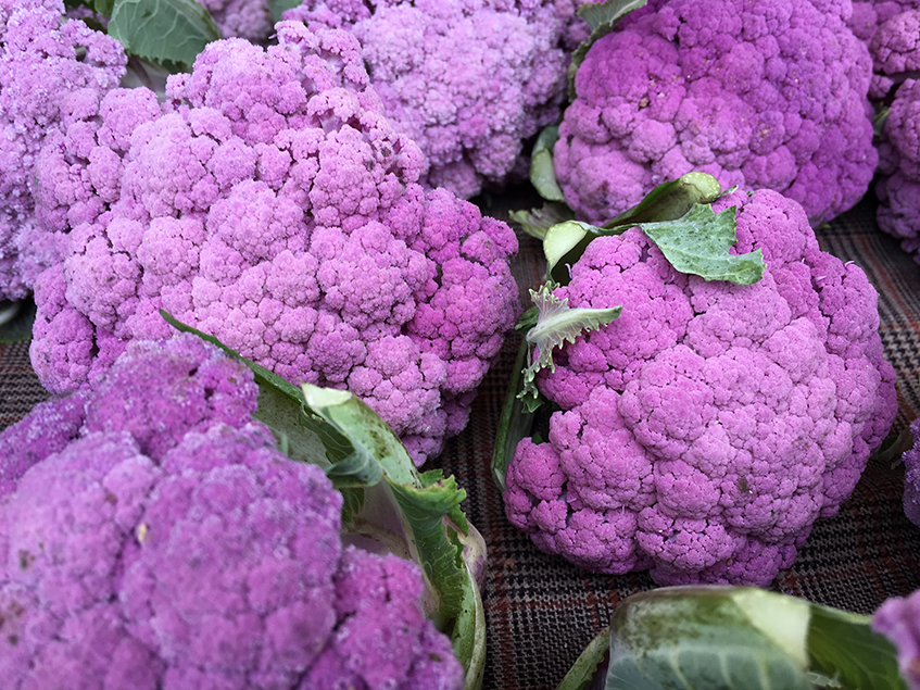 "alt=""Pantone 2018 - Ultra violet 18-3838 - Colore dell'anno - Cavolo viola"""