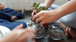 Terrario-plantas