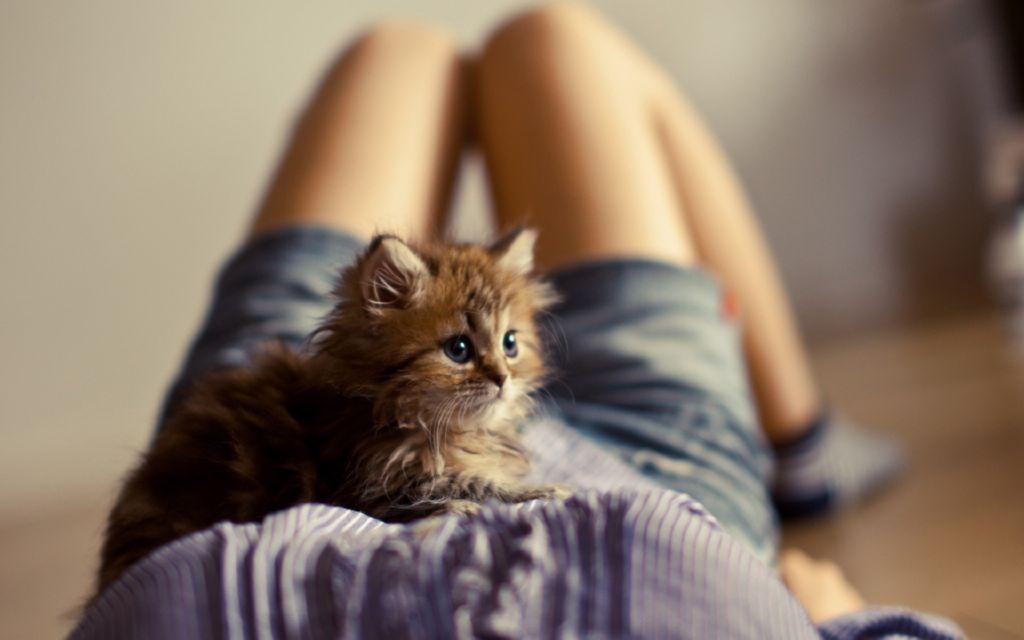 Gatos Y Bebés. ¡Qué La Toxoplasmosis No Te Haga Elegir