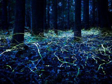Blue-ghost-fireflies-forest-north-carolina_Spencer-Black