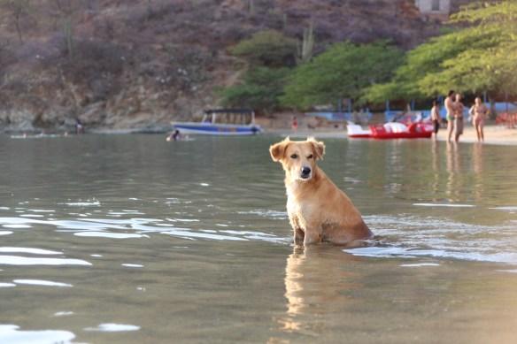 Hundehitze am Strand von Taganga
