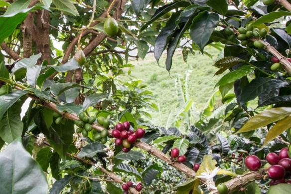 Kaffee und Avocado verstehen sich blendend