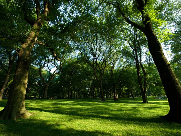green canopy of trees in Central Park, New York, USA