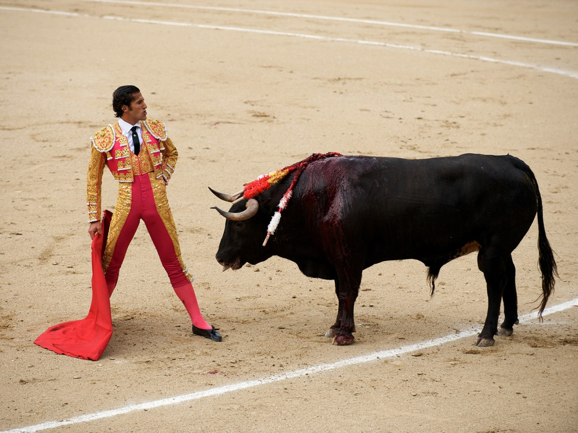 a torero defies the bull in the ring before killing him at a corrida in Las Ventas, Madrid, Spain
