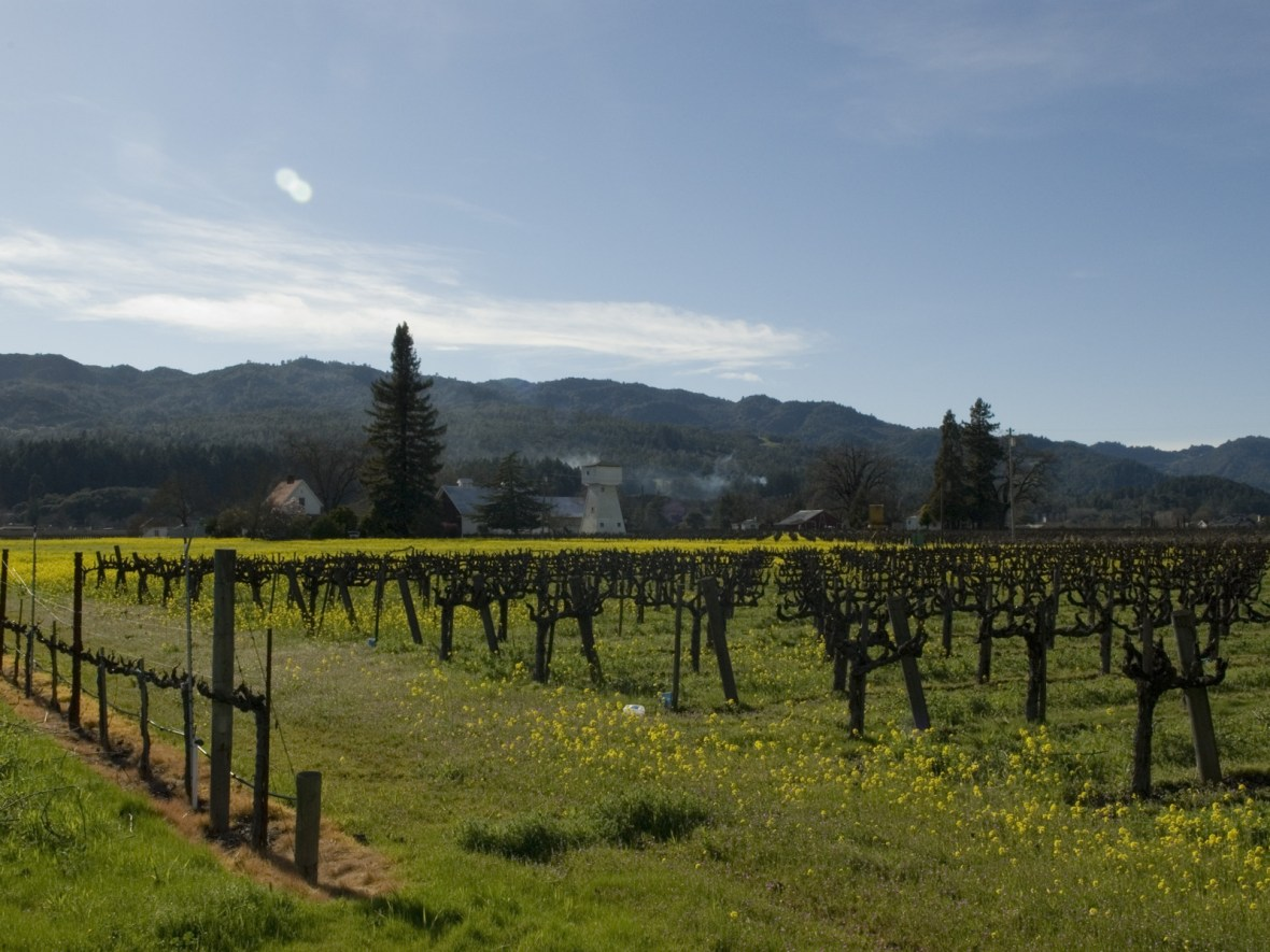 the vineyards of Napa Valley, California, USA