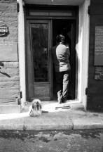 chien resto Corse