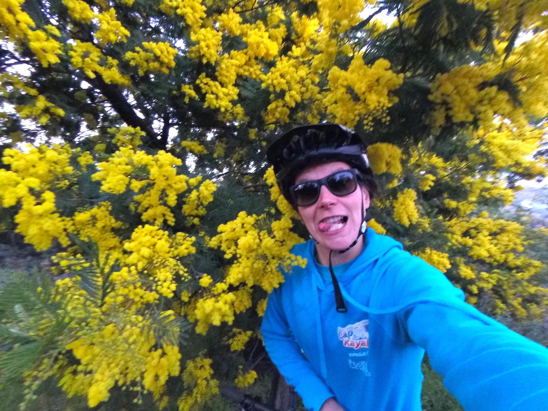 On rigole dans les mimosas