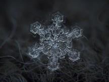 AlexyKljator_Snowflake3