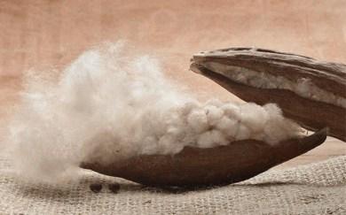 Kapok fiber (Source: http://www.debralynndadd.com/q-a/kapok-fill-for-comforters/)