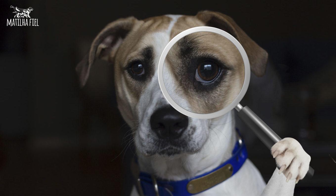 Ciência mostra que cães podem detectar uma pessoa ruim