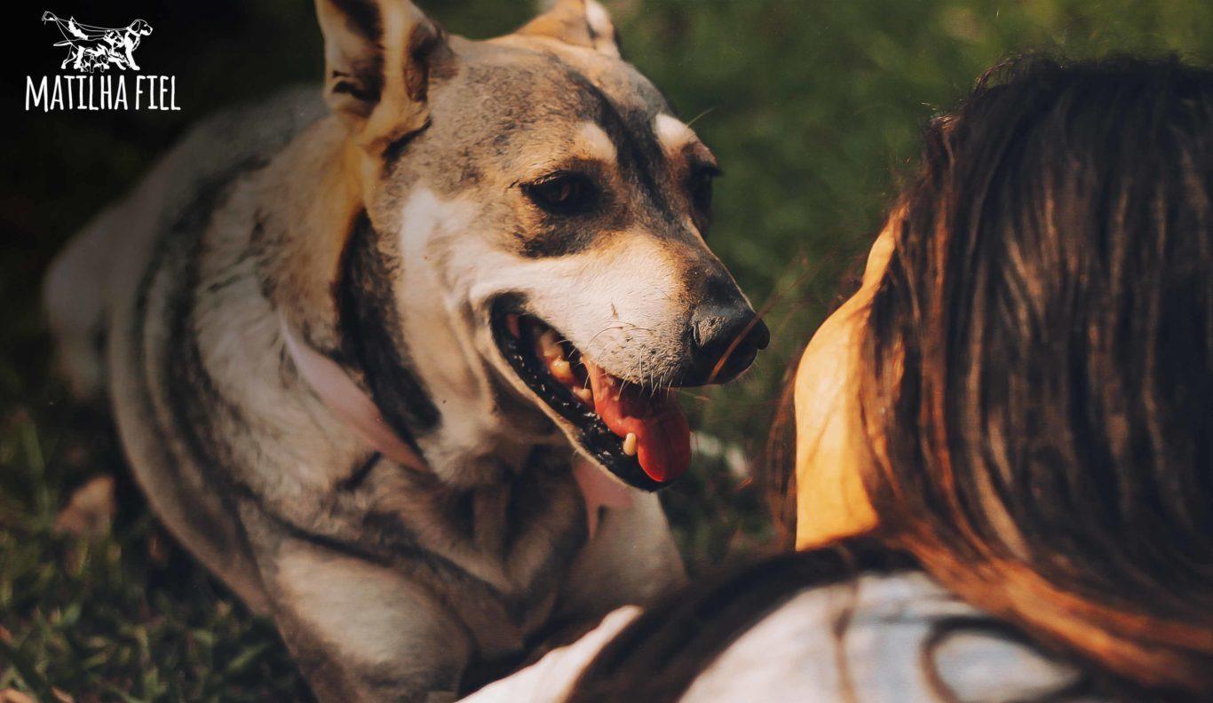 Quanto amor você tem pelo seu cão?