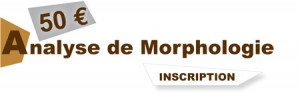 analyse-morphologie