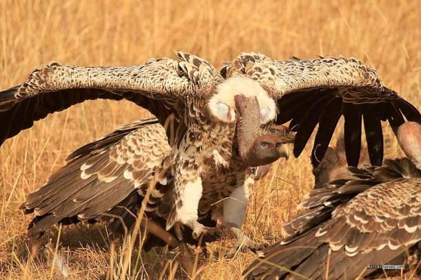 matira-safari-bushcamp-birding-00003