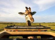 matira-safari-bushcamp-activities-gamedrive-00011