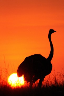 matira-safari-bushcamp-activities-sundowner-00006