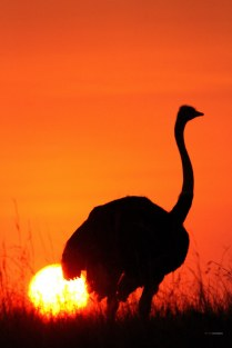 matira-safari-bushcamp-activities-sundowner-00006