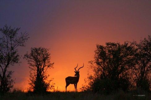 matira-safari-bushcamp-activities-sundowner-00010