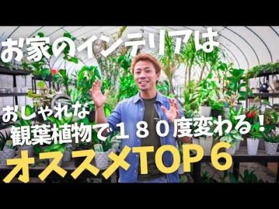 """【おしゃれな観葉トップ6】""""これでいっか""""で観葉植物選ぼうとしていませんか?!観葉植物で180度インテリアは変わります!!"""
