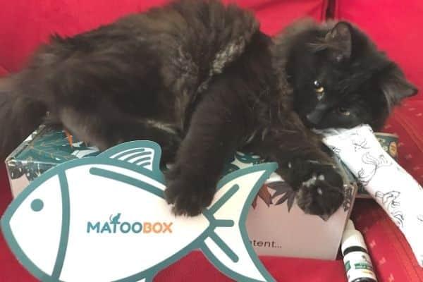 matoobox-boxchat-cbd