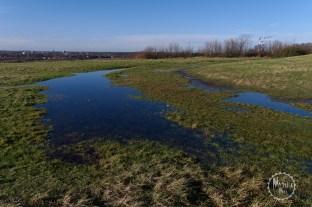 Feuchtgebiete auf dem Rungenberg