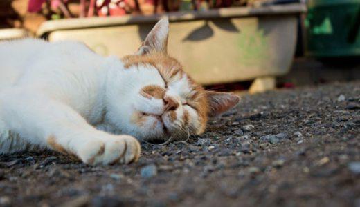 【画像】猫バンバンをして車に乗る人は寒くなる季節に備えよう