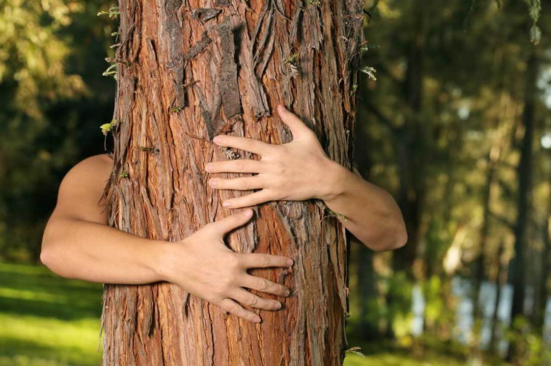 Healing Power of Trees - Spiritual and Healing Properties of Trees