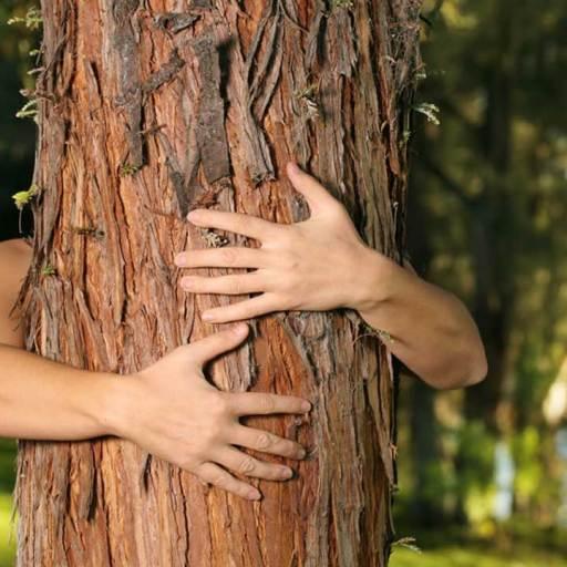 Healing Power of Trees - Spiritual and Healing Properties of Trees