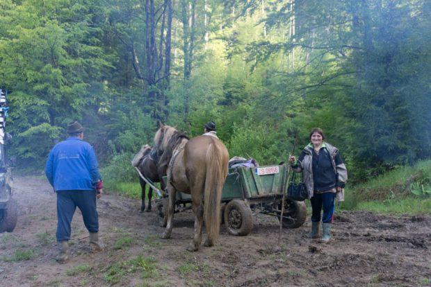 Nur die Rumänen mit ihren Pferdkutschen, die fahren sich nicht fest