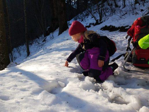 Faehrtenlesen-im-Schnee