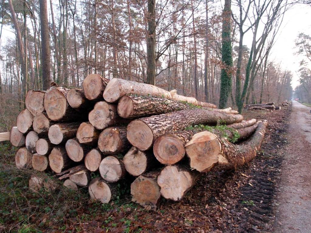 森の中に積み上げられた木材、カールスルーエ、2008.12.15. © Matsuda Masahiro