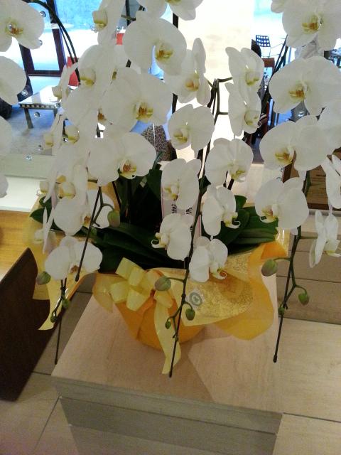 箱根ハイランドホテルのロビー (1)