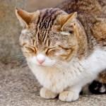 ペコリという姿勢の猫