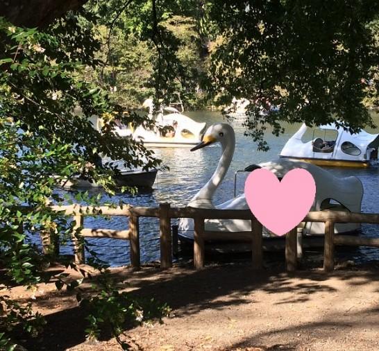 鳥のボート