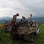 葡萄を運ぶトラック