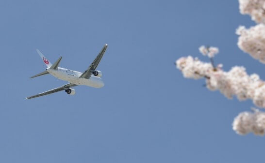 JALの飛行機と桜