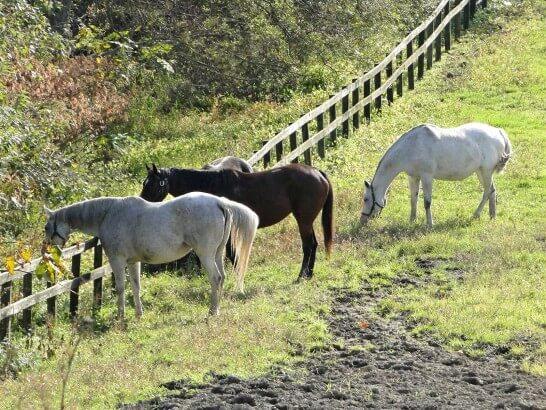 牧場にいる3頭の馬