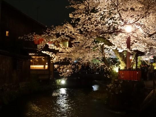 夜の料亭と桜