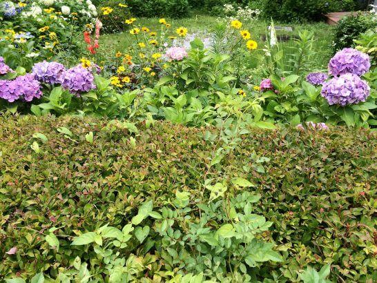 休暇村奥武蔵の庭のお花