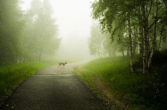 霧の中の道と犬