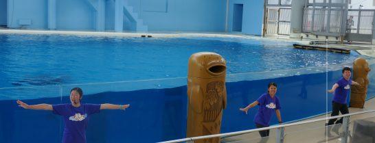 八景島シーパラダイスの海の動物達のショーのアドリブの説明