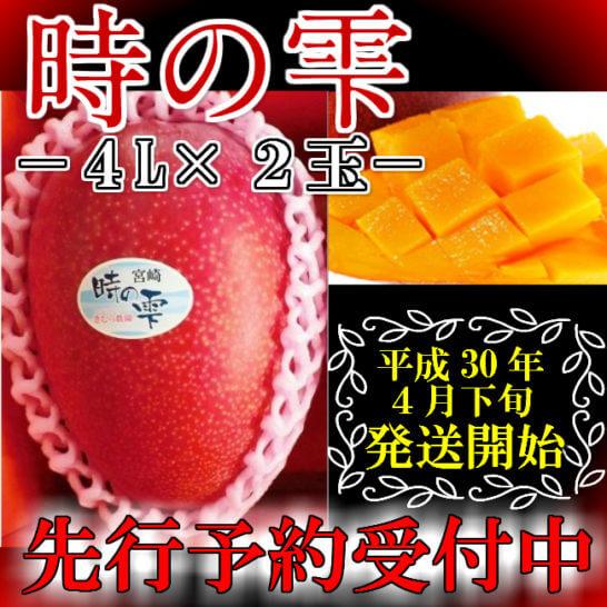 時の雫マンゴー 約1~1.3kg