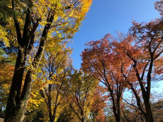 吉祥寺の井の頭公園の紅葉