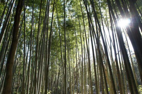 御殿場の林