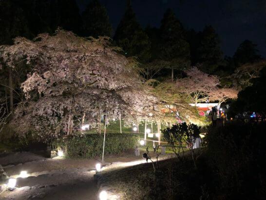 醍醐寺の憲深林苑の夜桜